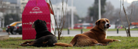 Chilean online initiative seeks homes for stray dogs