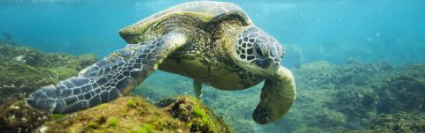 Obama creates in Hawaii world's largest marine protected area