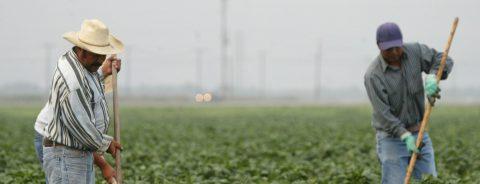 Aprueban en California mejora a horas extras para trabajadores agrarios