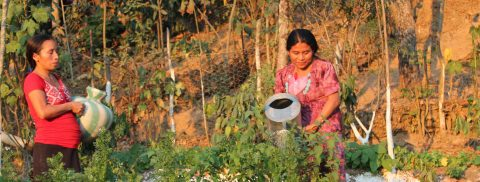 Guatemala learning to harvest the rain to prevent malnutrition