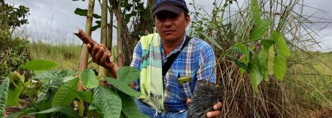 Peace brings hope of legal livelihoods for rural Colombians