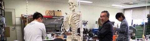 Desarrollan músculos artificiales para robots y para prótesis de humanos