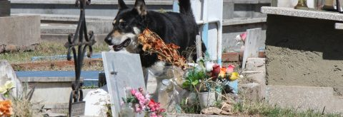 Dog who guarded owner's grave for a decade dies