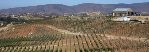 The surprising Mexican wines of Valle del Guadalupe