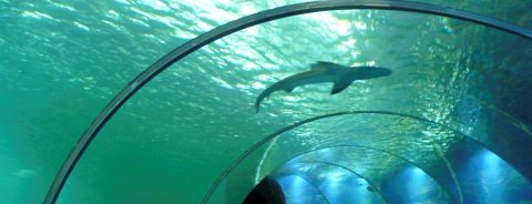 Oceanic treasures from Colombian island emerge in France wildlife exhibit