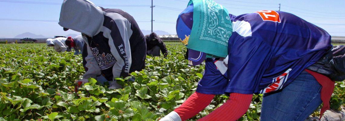 """""""Cambios a visas de trabajadores agrícolas afectarán al sector"""" activistas y sindicato"""