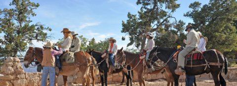 La mula, un animal todavía útil en el Gran Cañón
