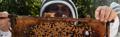 Colombian farmers making honey their way of life