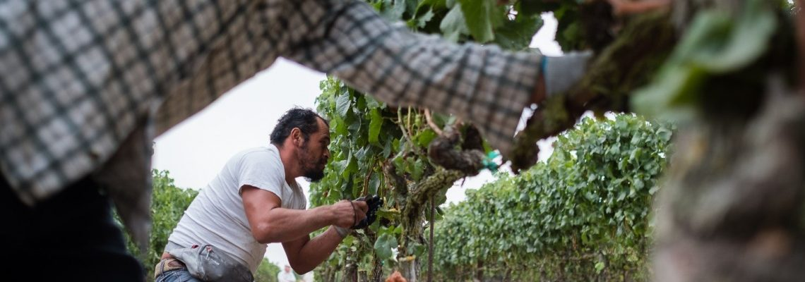"""""""Harvest Season,"""" California wine with Mexican ingredients"""