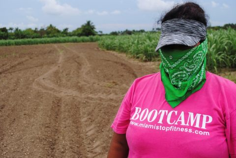 Indocumentados agrícolas de Florida en alerta ante amenaza de redadas masivas