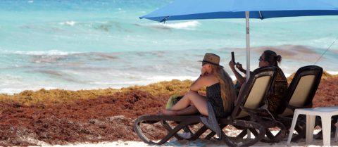 Comienza limpieza de alga del sargazo en playas de Miami Beach