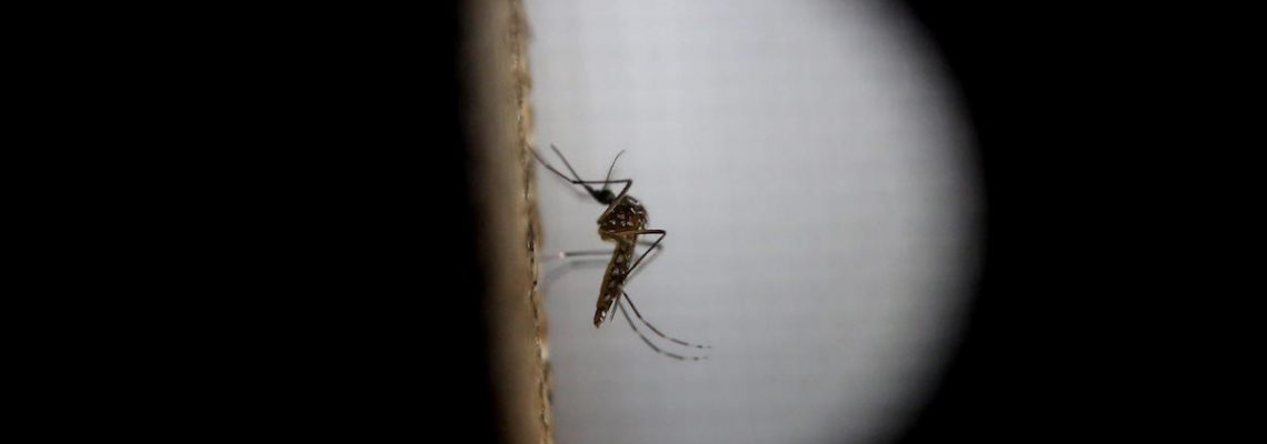 Aumentan a 12.081 los casos de dengue en Guatemala con 27 muertos