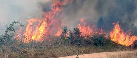 El mundo exige salvar la Amazonía