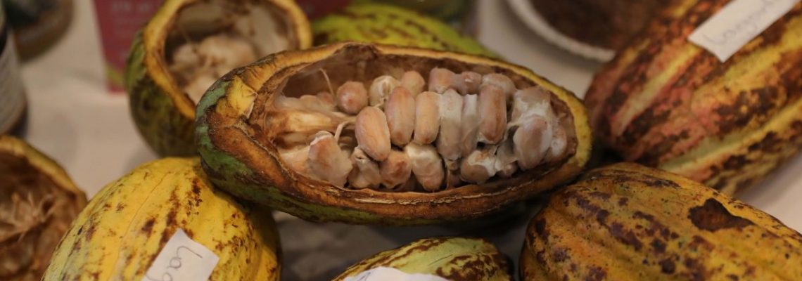 México se reivindica como punto de origen del chocolate
