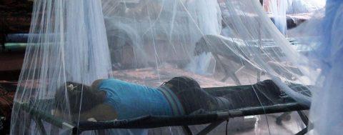 Aumenta a 101 la cifra de muertos por dengue en Honduras