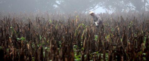 La Cumbre del Clima deberá abordar la crisis del Corredor Seco Centroamericano