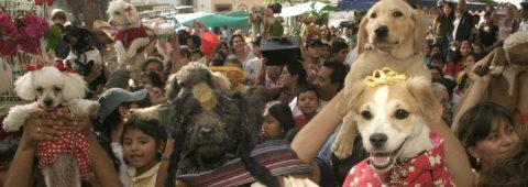 Oaxaqueños bendicen todo tipo de mascotas en una iglesia del sur de México