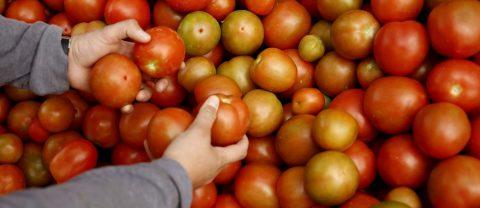 EE.UU. inspeccionará importaciones de tomates y chile de México contra un virus