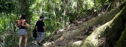 """Bosque puertorriqueño """"El Yunque"""" se prepara para altas visitas en Navidad"""