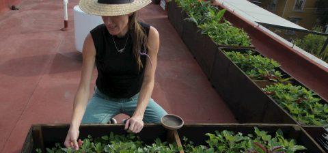 Conciencia ambiental penetra poco a poco en el campo y las ciudades de México