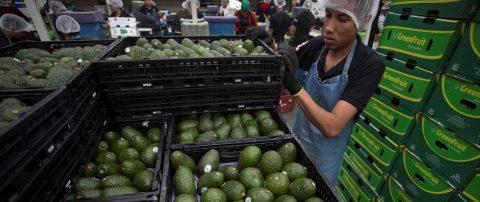 Supera los 50.000 millones de dólares comercio agroalimentario México-EE.UU.