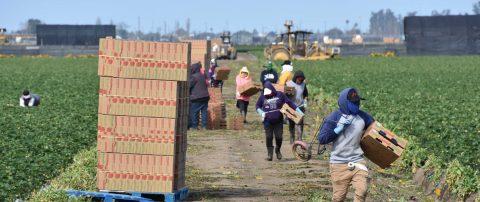 En la primera línea contra el coronavirus, los campesinos piden protecciones