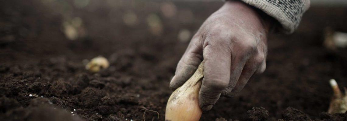 Expertos piden apoyar pequeña producción agropecuaria de América por COVID-19
