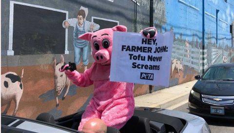 """""""Cerdo pandémico"""" para protestar contra matadero con 150 positivos de COVID"""