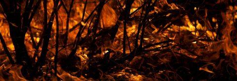 Sequías e incendios cambian el bosque de coníferas entre California y Oregón