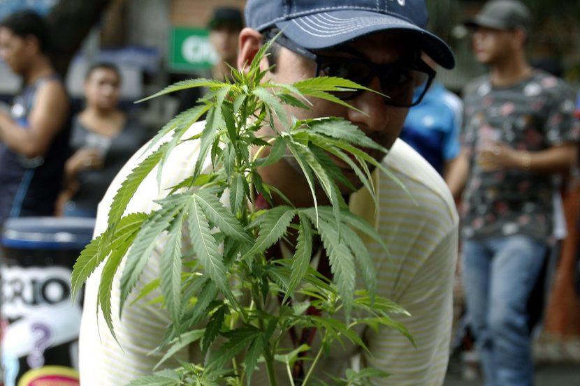 Diputado propone legalizar el uso terapéutico de la marihuana en El Salvador