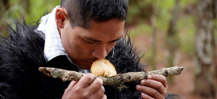 Tzotziles de México disfrutan en temporada de lluvias de recolecta de hongos