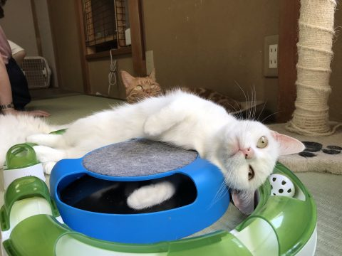 Purr-fect Guest: Hotel Offers Trial Runs for Would be Cat Lovers