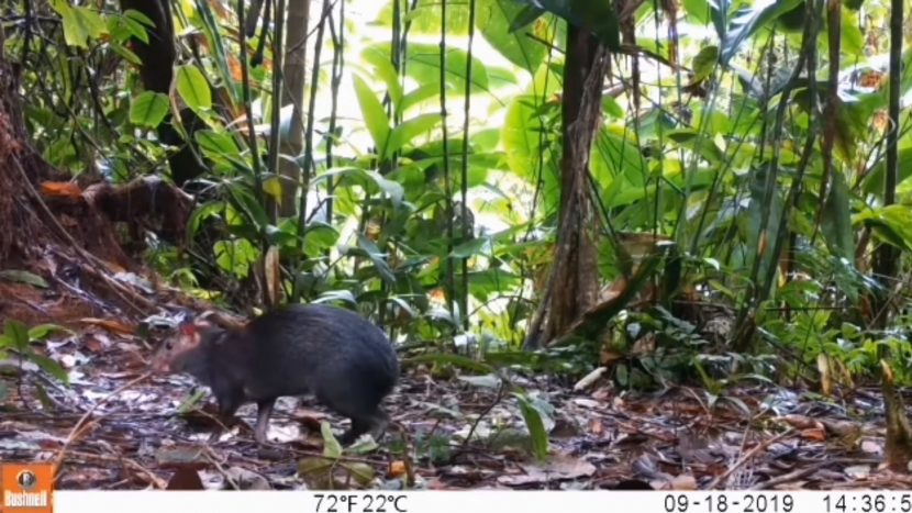 PHOTOS: Wildlife caught on camera reveal a rainforest on the mend