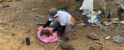 Cerca de 40 tortugas de San Cristóbal regresan a su hábitat en Galápagos