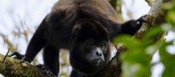 """Reducir la pérdida de la biodiversidad evitará una """"era de pandemias"""""""