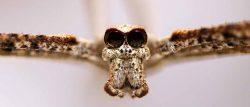 """Las arañas pueden """"oír"""""""