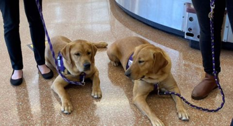 Paws for Purple Hearts Choses Silicon Valley's Airport