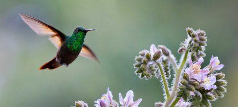 Un proyecto fotográfico ayuda a cuidar la fauna endémica de Ciudad de México