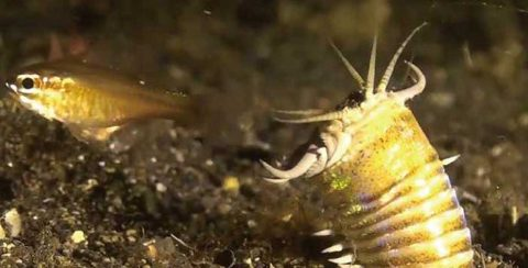 Revelan que el fondo marino estuvo habitado por gusanos depredadores gigantes